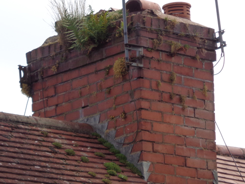 Chimney flashing with moss